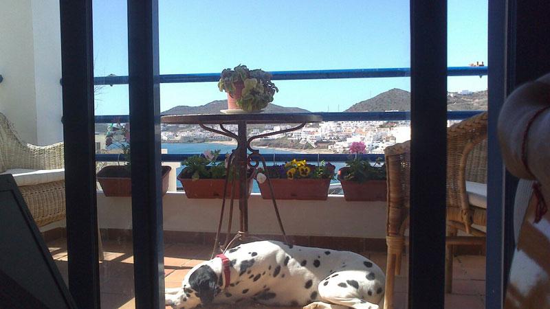 alojamiento para vacaciones con perro en Cabo de Gata