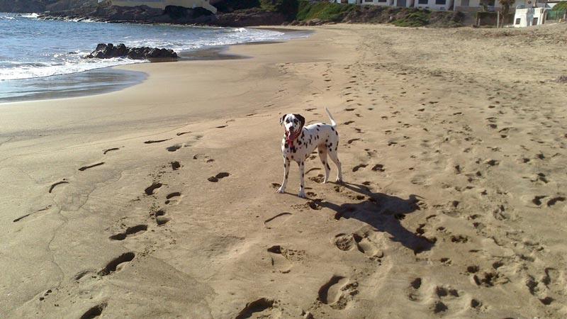 vacaciones con perro en Cabo de Gata