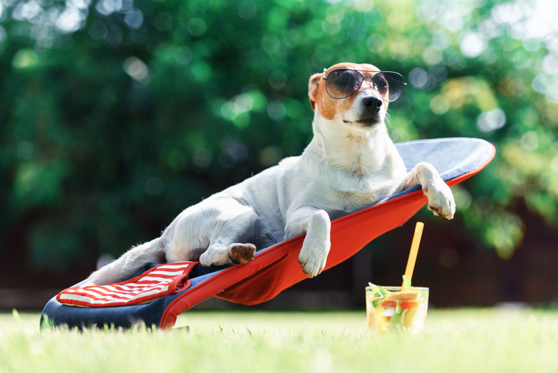 Ocio para unas vacaciones con perro en Cabo de Gata