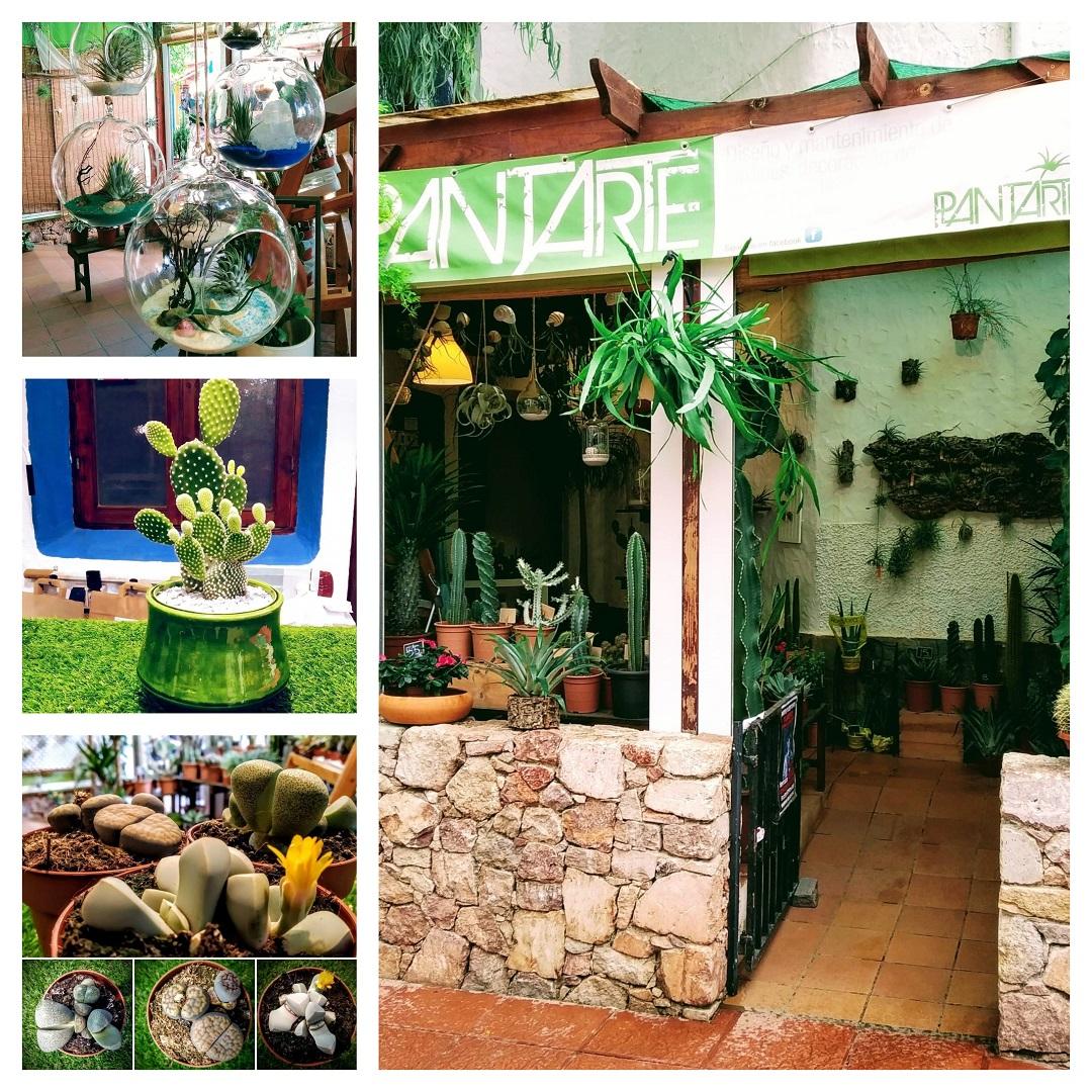 Tienda de plantas en San José