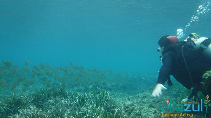 Bautismo de Buceo en Cabo de Gata Los Escullos - Villazul Turismo Activo Cabo de Gata
