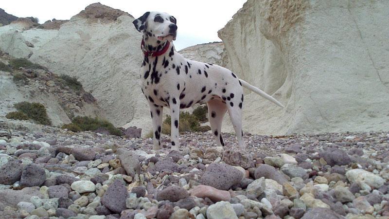 Senderismo con perros en Cabo de Gata