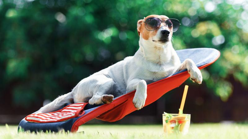 Ocio con perro en Cabo de Gata
