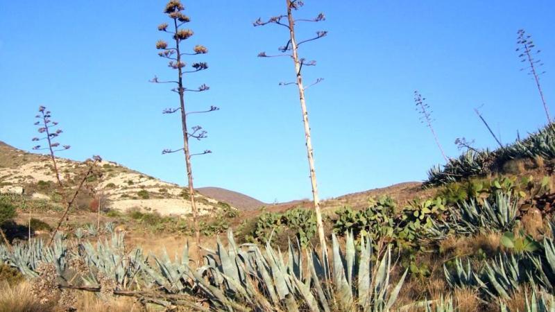 Vegetación en el Sendero de la Caldera